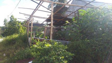 Penampakan sebuah Rumah Kajang yang terbengkalai di sebelah rumah Risky. (Foto: Ade Surya Tawalapi).
