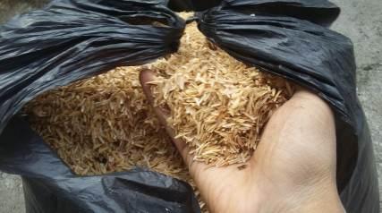 Sekam mentah (foto: Sayurankita)