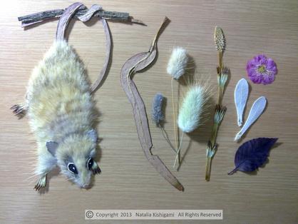 """bahan-bahan yang digunakan untuk membuat oshibana """"Moonwalker"""" karya Natalia Kishigami. Arsip: artfloreo.com"""