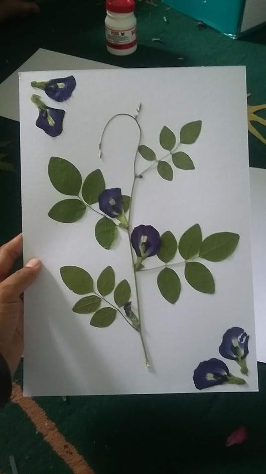 Aktivitas Kebun Ii Belajar Tentang Oshibana Dan Herbarium Sayurankita